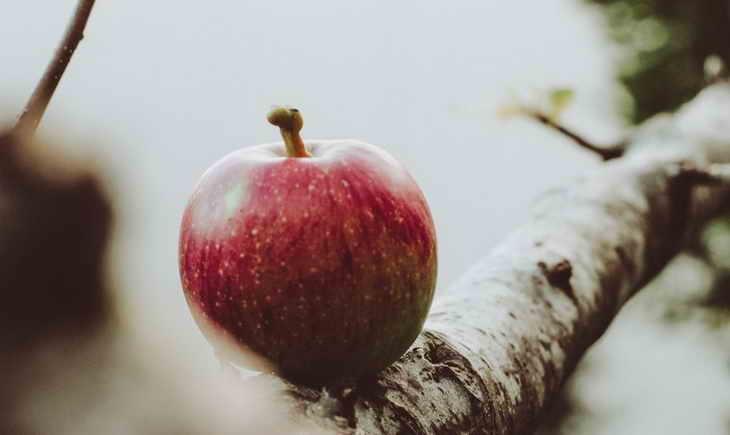 Яблочная диета для похудения.